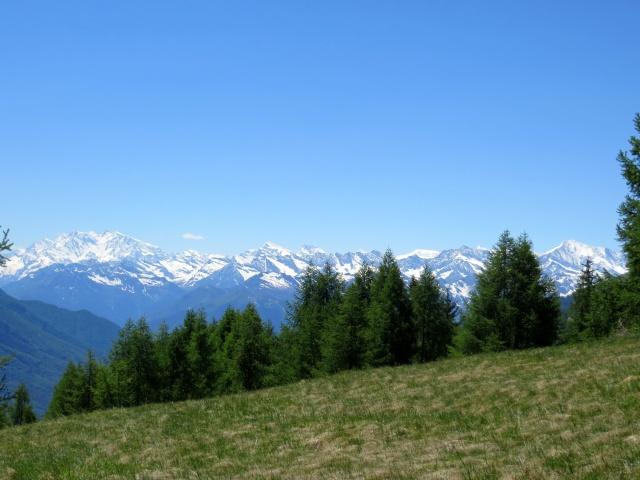 Panorama sull'arco alpino dalla Colma di Craveggia (Catena del Monte Rosa e Trittico del Sempione)