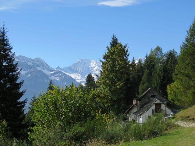 Salita all'Alpe Solcio, particolare