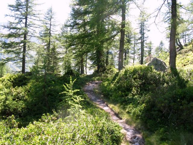 Tratto di sentiero in direzione dellla Capanna Piansecco