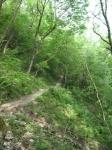 Single track prima del Sentiero dei Faggi