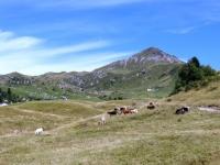 Piani di Artavaggio, sullo sfondo il Monte Sodadura