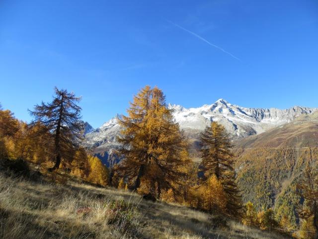 Tra l'Alpe Folcra e l'Alpe Stabiello Grande - colori autunnali