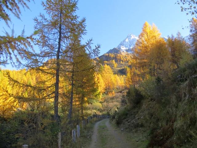 In direzione dell'Alpe Cassina