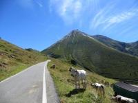 Il rettilineo finale che precede il Colle delle Finestre  - sullo sfondo il monte Pelouxe ed il Pelmo
