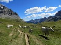 I pascoli sottostanti il Colle di Valle Stretta - Plain de Tavernette