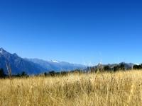 Nei pressi dell'Alpe Champ Chellier Superiore - particolare