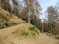 Il tratto di salita in forestale al Monte Legnoncino
