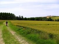 Percorso tra campi coltivati