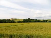 Campi coltivati attorno a Cereseto