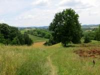 Tratto di percorso nei campi - trail