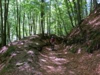 Tratto di forestale che collega Armeno con Coiromonte