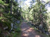 Il sentiero nel bosco che ha inizio da Zeneggen