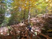 Parte dell'itinerario NON in traccia - il trail che si sviluppa nei boschi della Zwischbergental