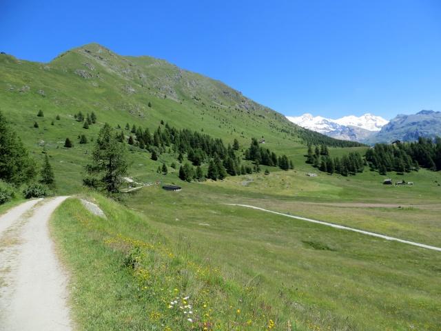 Tra i pascoli della alta Val di Ayas occidentale, arrivo alla Alpe di Metsan