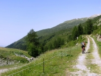 Salita in forestale al Grimselpass