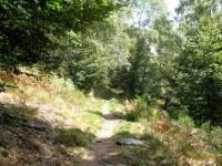 Single-track al termine della salita in direzione dell'Alpe Cardada