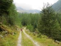 Tratto finale della forestale che si inoltra in Val Bondolero