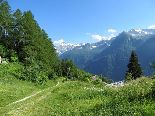 Discesa dall\'Alpe di Chiera (tratto non presente in traccia causa sentiero impraticabile per abbattimento alberi)