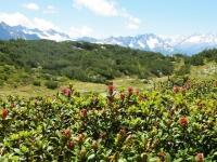 Alpe di Chiera, particolare