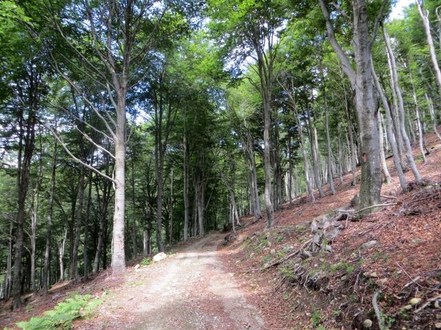 Forestale per l'Alpe di Piero ed i Monti di Pino
