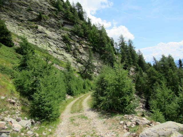 Ultimo tratto in quota su sterrato che precede Alpe dei Piai
