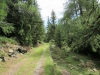 La forestale che dall'Alpe dei Piai scende all'Alpe Foppascia