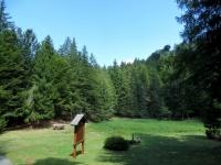 La prima area picnic che si incontra salendo all'Alpe Pescia