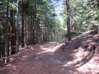 La forestale che scende dall'Alpe Pescia alla Corte dell'Ariola