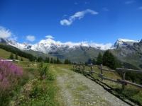 Col Champillon - panorama sull'eccezionale corona alpina. Dents du Vélan (sx, mt. 3. 597 ), Grand Combin (centro, mt. 4.314), Mont Gelè (dx, mt. 3.518)