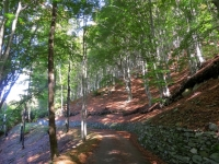 Salita ai Monti di Motti - bosco dei faggi