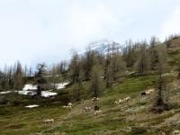 Panorama - gli alpeggi superiori di Simplon Dorf