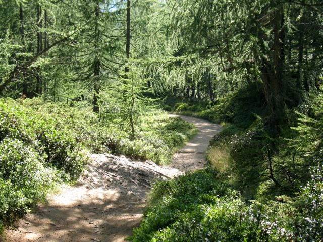 Discesa attraverso sentiero da Corte d\'Ardui verso l\'Alpe Devero