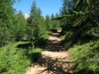 Traccia sterrata che costeggia il Lago in direzione Alpe Forno