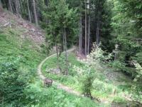 Alps Epic Trail Davos - Discesa in direzione di Davos Wiesen