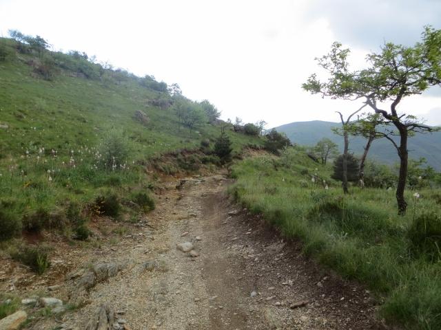 Forestale che sale ai Piani di Praglia nel tratto difficoltoso ma ancora pedalabile