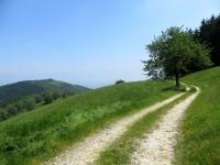 Lungo il sentiero della Granfondo del Mottarone - sullo sfondo il Monte Falò