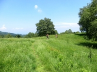 Lungo il sentiero della Granfondo del Mottarone, trail nei prati