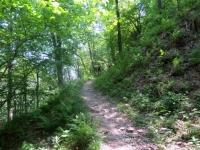 Lungo il sentiero della Granfondo del Mottarone - trail nel bosco
