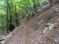 La forestale che sale alle postazioni militari del Sasso Gordona (Linea Cadorna)