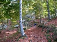 Discesa dal Monte Avigno