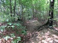 Tratto scorrevole del sentiero 13-313 che scende dal Forte di Orino