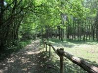 Bel tratto di sentiero nel bosco percorrendo il segnavia 10-310