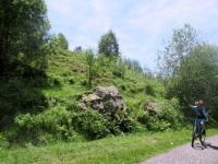 Salita al Monte Calvo - rododendri ancora in fiore