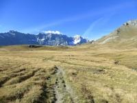 Il sentiero prativo sulla via di ritorno per Cervinia