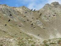 In direzione del Col de Granon - Particolare