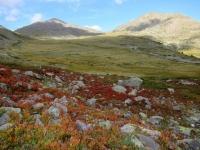 Attorno al Col de Granon le foglie dei mirtilli preannunciano l'arrivo dell'autunno (settembre 2018)