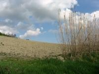 Colline del Monferrato - particolare