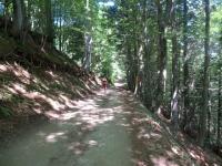 Forestale che inizia al bivio presso l'Alpe Lusentino per l'Oratorio di San Bernardo