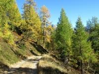 Lungo lo sterrato che da Üerlichergale scende a Ulrichen - Colori autunnali