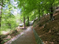 Salita all'Alpe Bolla, inizio del tratto sterrato ripido
